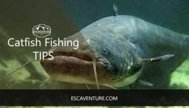 catfish fishing tips