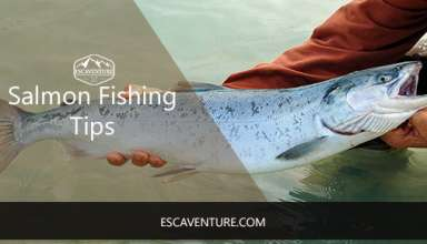 salmon fishing tips