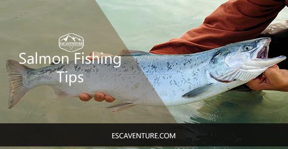 salmon fishing tips